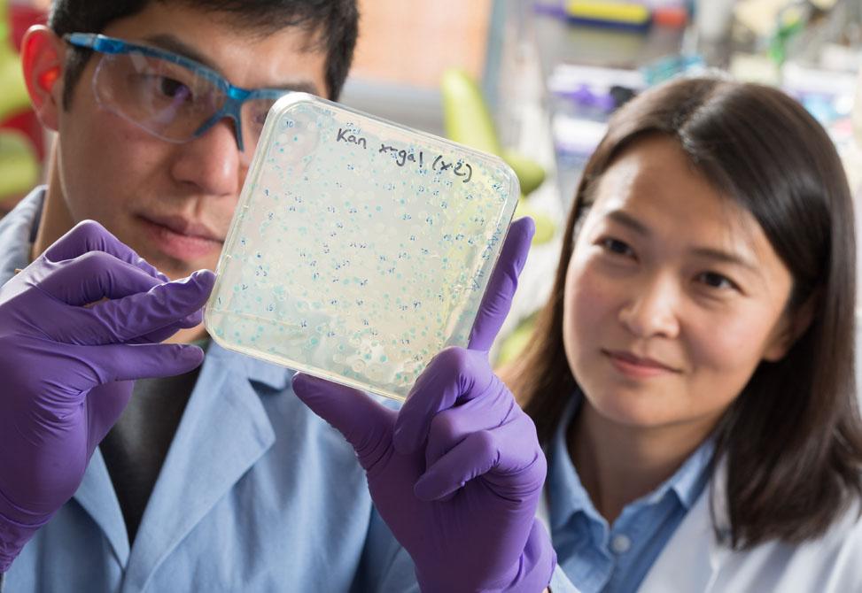 Chemistry graduate student Andrew Chan, with Bo Li